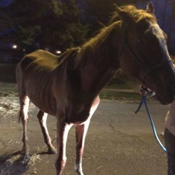 Another Animal Dies After Dead Horse Was Discovered in Trailer