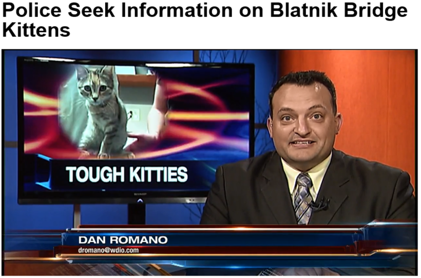 Police Seek Information on Blatnik Bridge Kittens
