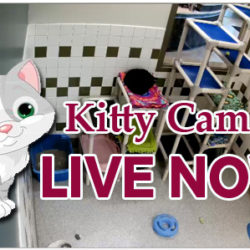 Have You Seen Our Kitty Cam?