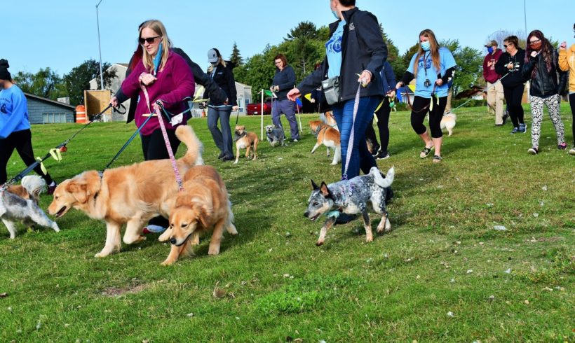 Who let the dogs out?  (Cause for the Paws 5k Kicks Off)